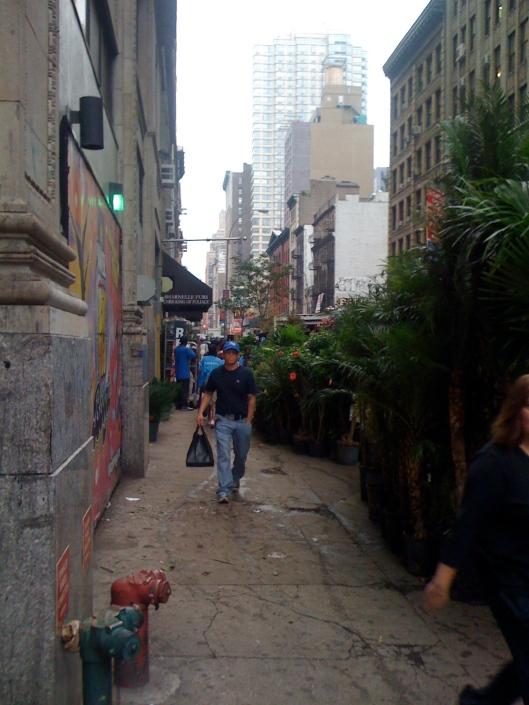 Plants lining the sidewalk on 28th Street in Manhattan