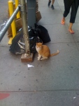 Saw a cat while walking to the subway to go home! A cat! Wow!